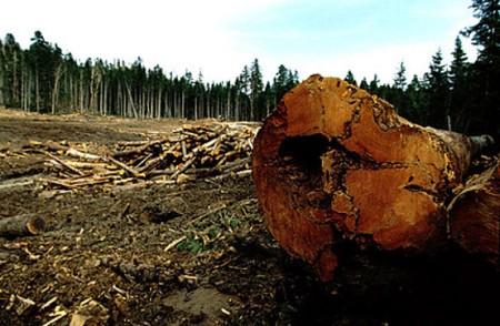 disboscamento-amazzonia-1005