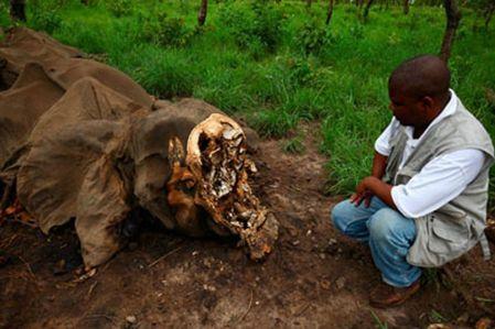 l43-camerun-elefante-120810152318_big